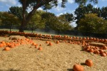 the pumpkin village